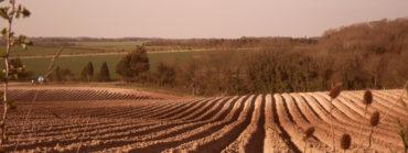Anglo-Saxon Farming